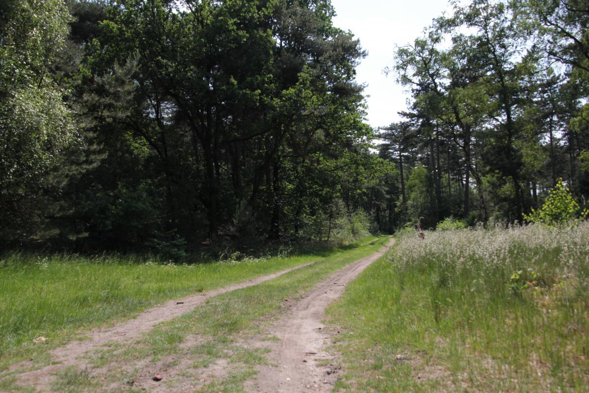 Camping de Zandberg Natuur 12