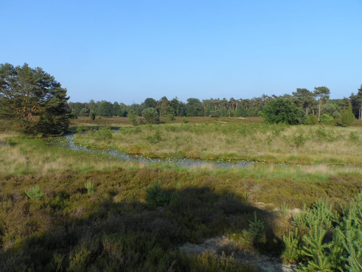 Camping de Zandberg Natuur 1
