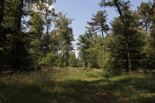 Camping de Zandberg Natuur 13